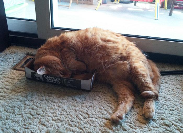 小さな箱で眠る猫