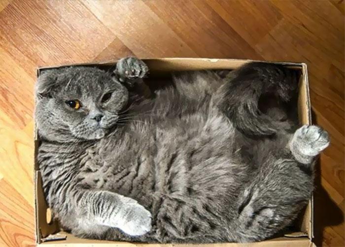 箱の中でぎゅうぎゅうの猫