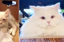 フワフワの猫