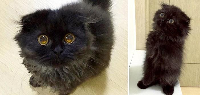 宝石のような瞳を持つ猫