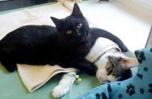 看護する猫