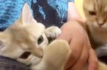 ナデナデしてもらいたい母猫