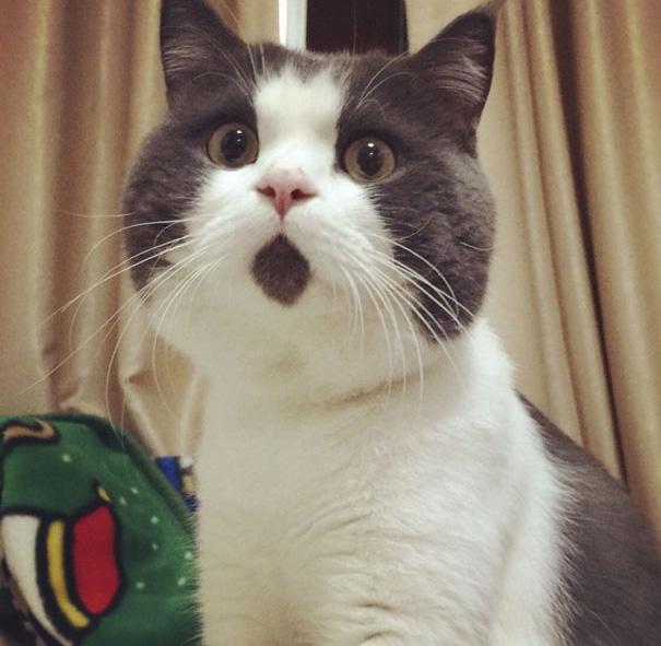 ビックリ猫