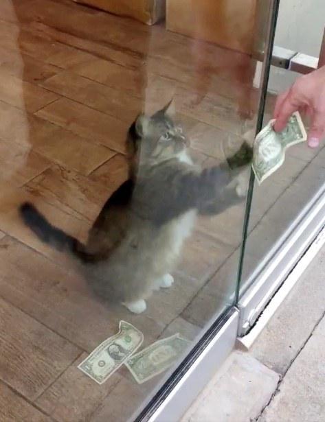 お金を取る猫