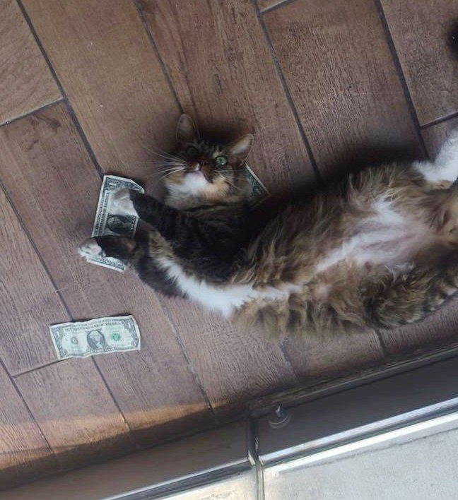 幸せそうな猫