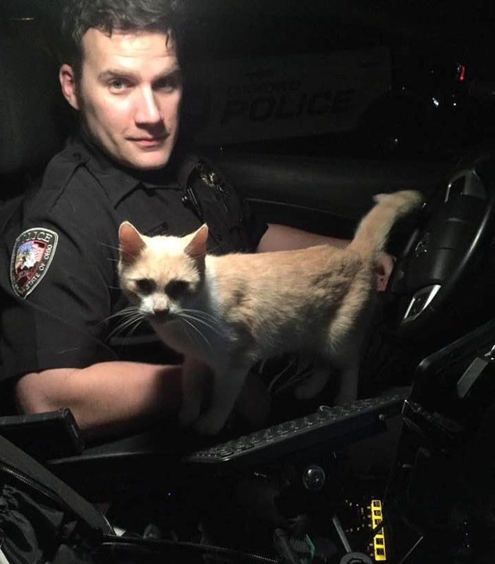 パトカーに乗ってきた猫
