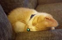 ガリガリだった子猫