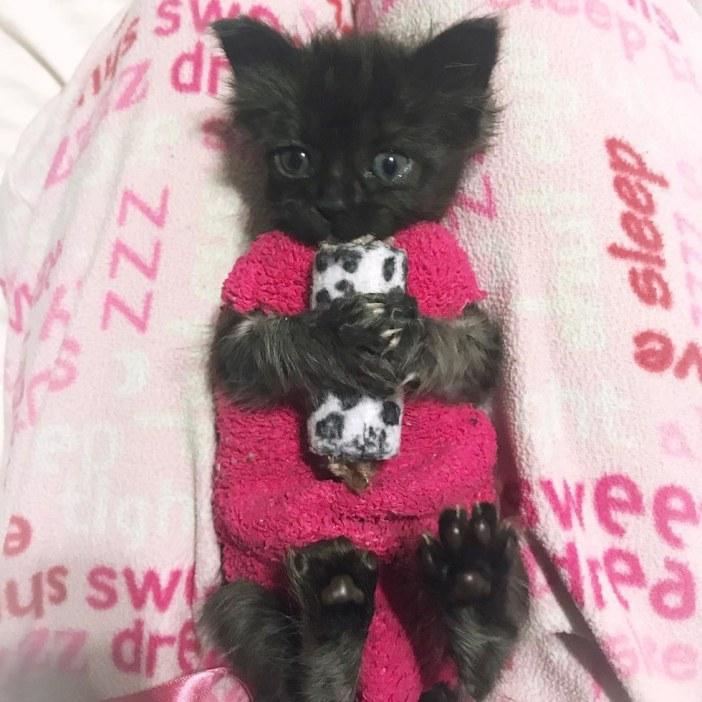 抱っこする猫