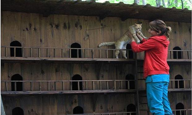 猫の街と女性