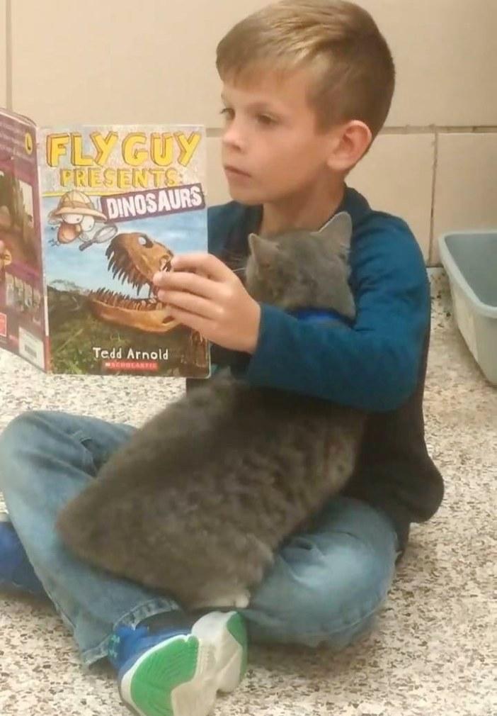 男の子にくっつく猫