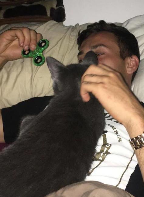 遊ぶ男性と子猫