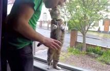 パパが大好きな猫達