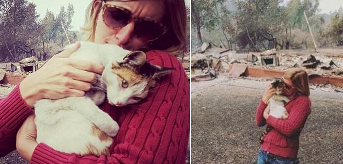 山火事から保護された猫