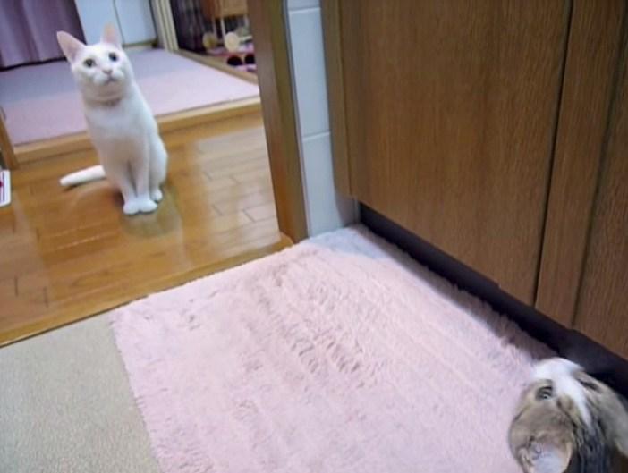 集まる同居猫
