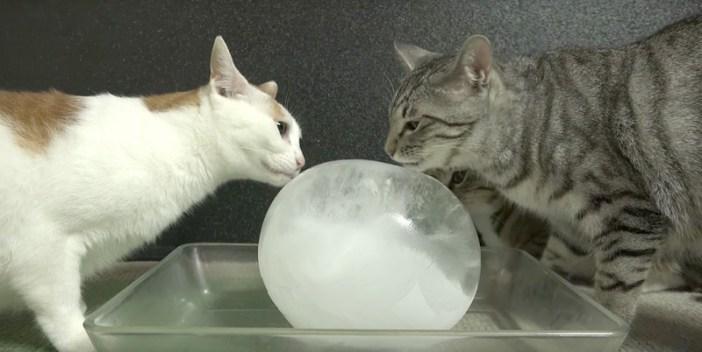 氷と出会った猫
