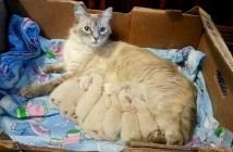 子猫を出産した母猫