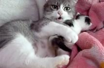 もみくちゃ子猫