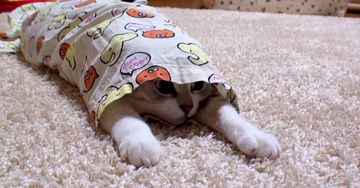 パジャマ子猫