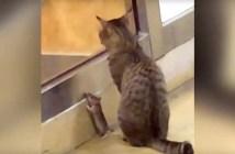 サンドイッチ屋さんの猫とネズミ
