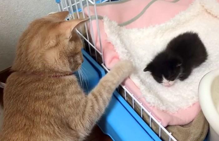 子猫が気になる猫
