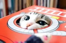 ハンター猫