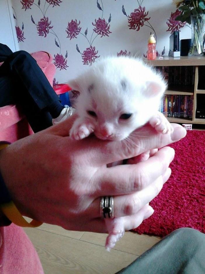もたれる子猫