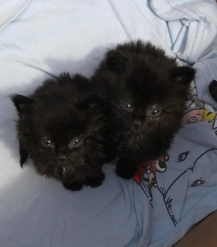 もふもふの子猫