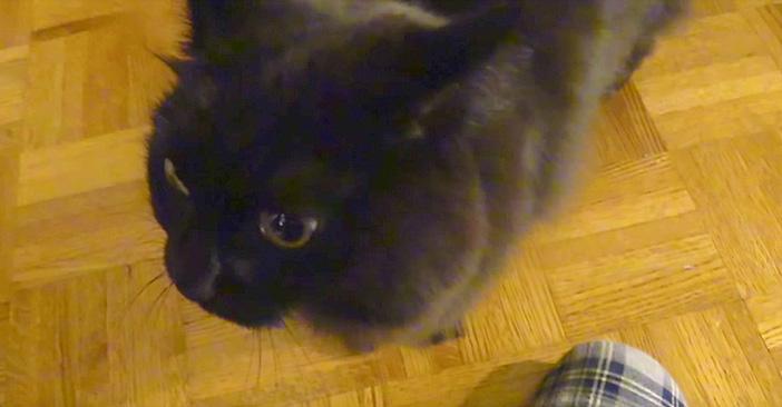 おかえりを言う猫