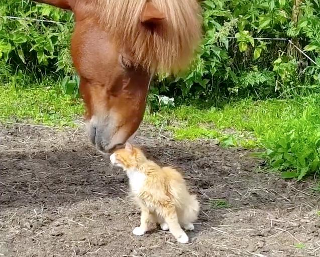 馬に甘える猫