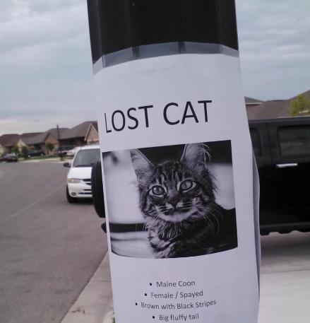 いなくなった猫