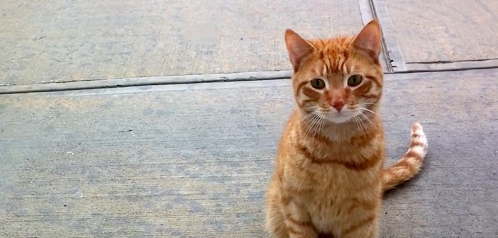 窓の外から見つめてきた猫