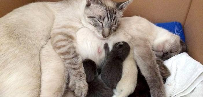 仲良しな猫の家族