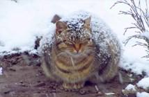 雪が積もっている猫