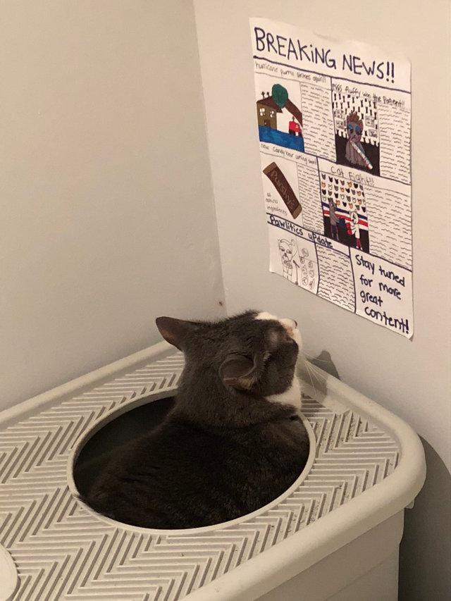 新聞を読む猫