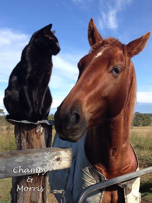 見つめ合う馬と猫