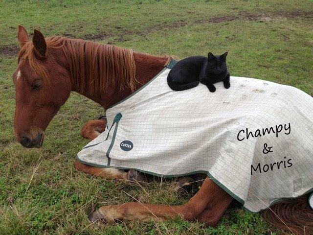 馬に乗る猫