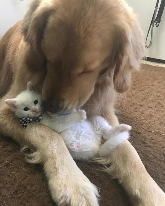 子猫を可愛がる犬