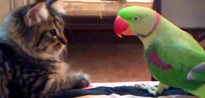 オウムと子猫
