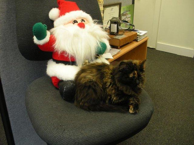 サンタさんと猫