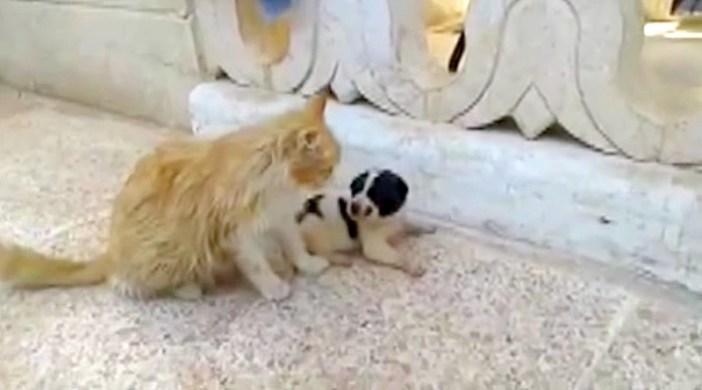 見つめ合う子犬と猫