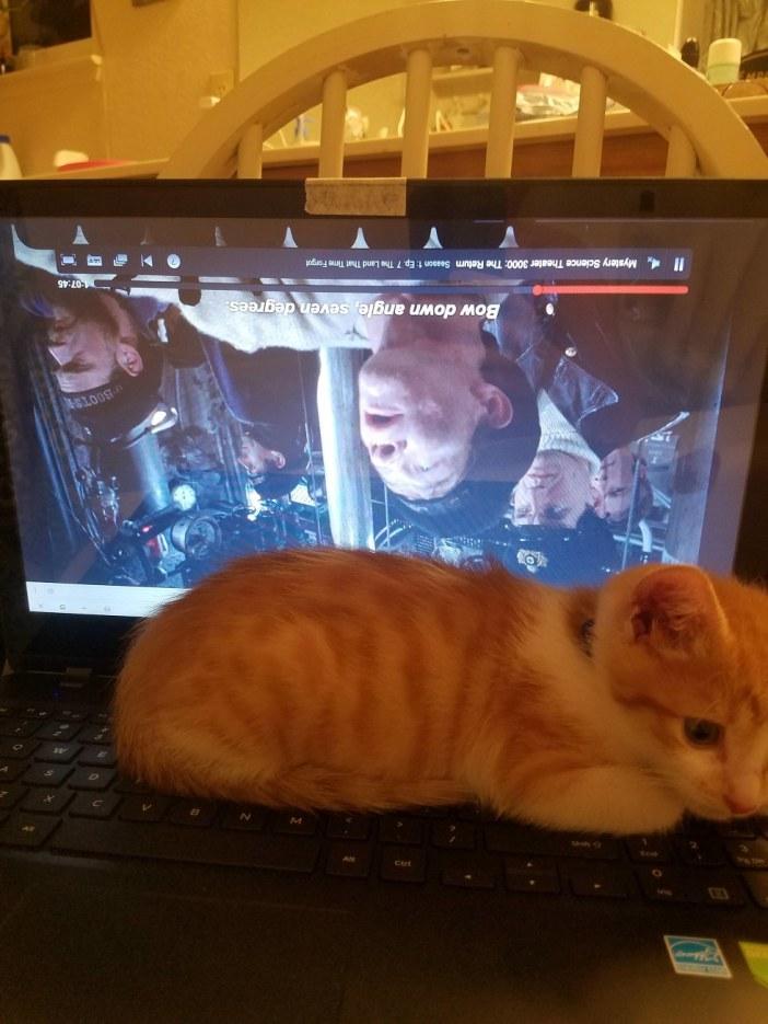 パソコン子猫