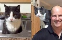 猫を引き取った里親さん