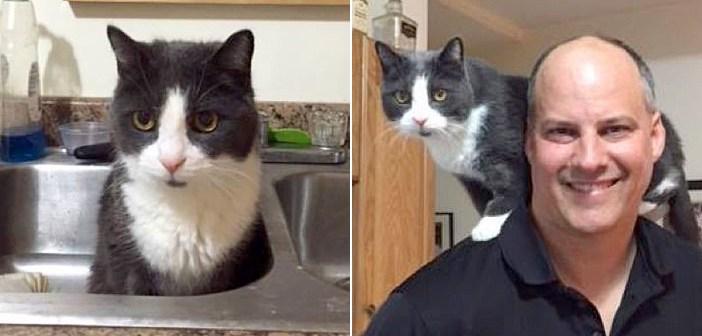 保護施設に引き渡され、新しい家族を待ち続けた18歳の老猫。ついに新しい家が見つかると、幸せいっぱいの変化が (*´ェ`*)