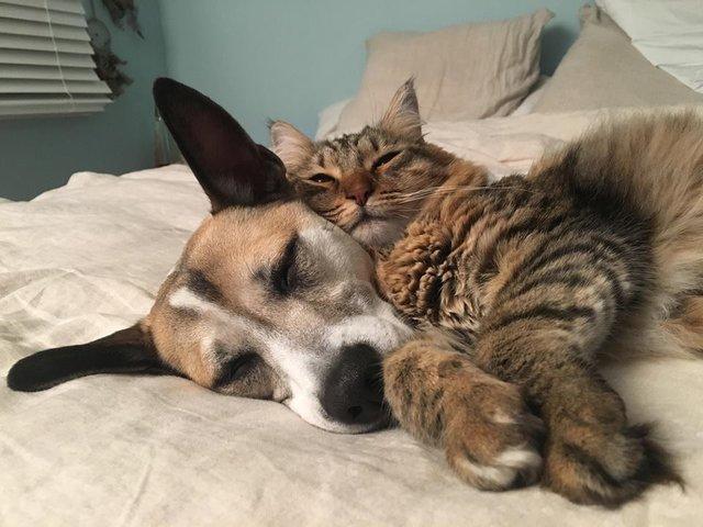 幸せな犬と猫
