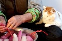 凍み大根と猫