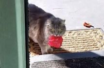 花を咥えた猫