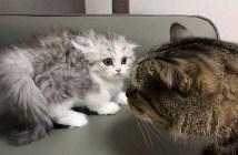 カチコチ子猫
