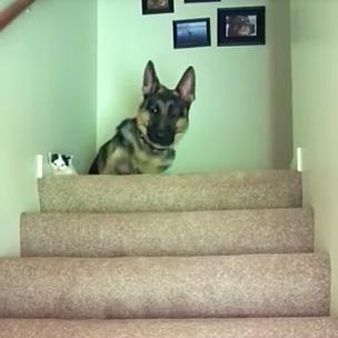 階段の上の犬と子猫