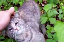 首輪がきつかった猫