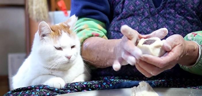 まんじゅう作りを見る猫